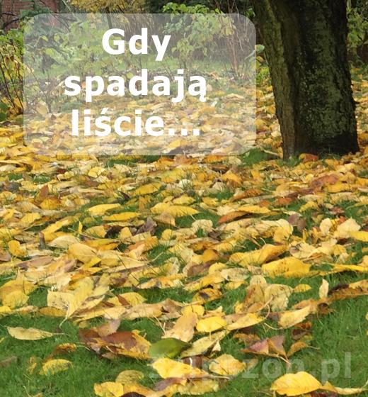 Gdy spadają liście...